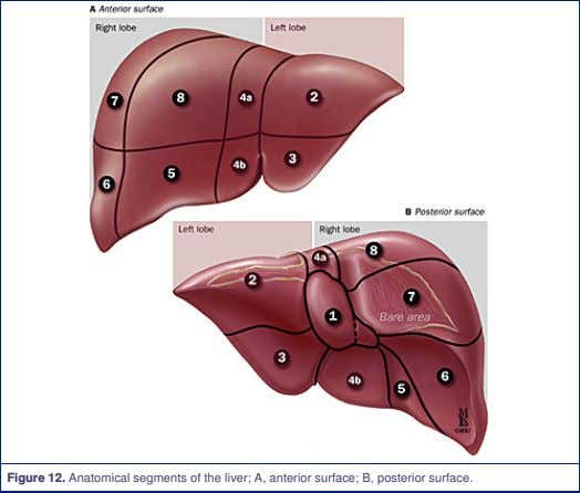 Figure 12. Anatomical segments of the liver; A, anterior surface; B, posterior surface.
