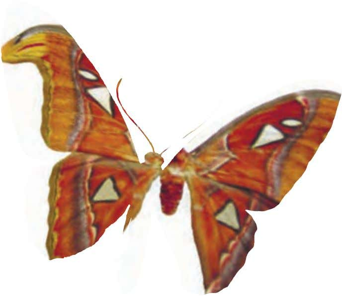The butterflies therefore are unpalatable to birds. The common name comes from the bright red spots