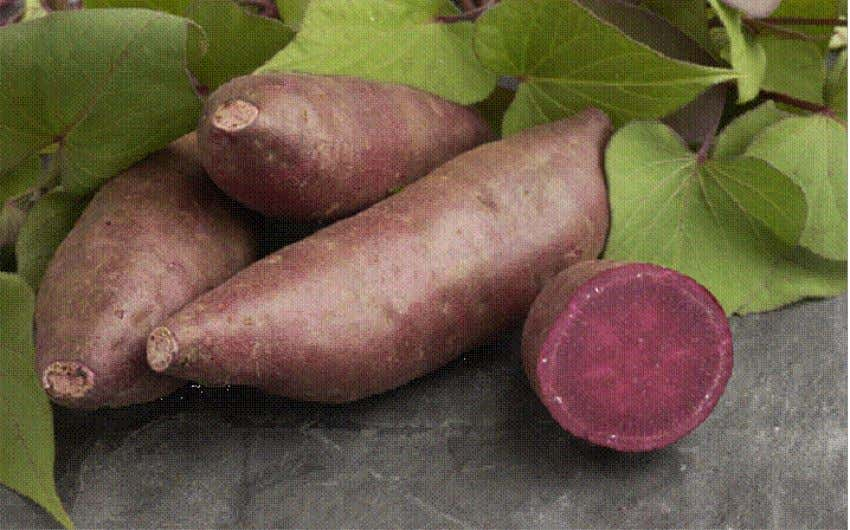(Sweetpotato/Kumara) Post-Entry Quarantine Testing Manual November 2012 Plant Health and Environment Laboratory