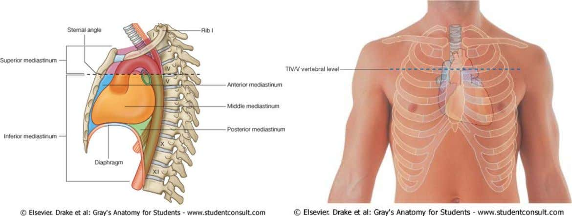through the sternal angle on the anterior chest wall and the intervertebral disc between T4 and