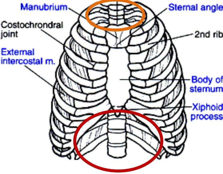 Overview of the Thoracic Inlet & Thorax Outlet INLET OUTLET