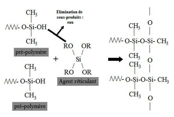 Figure 9 : polycondensation d'un polydiméthylsiloxane (13) M Braden et JC Elliott. Characterization of the setting