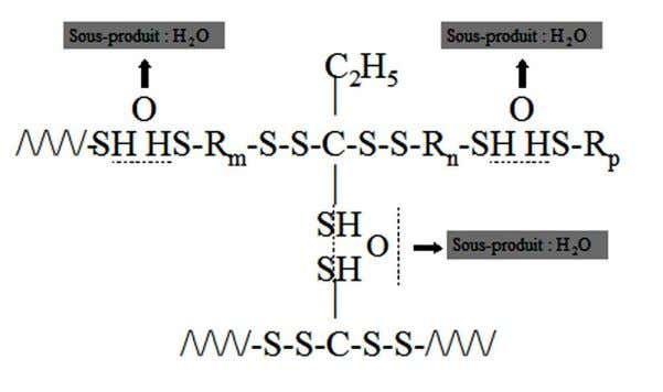 [voir 10]. Figure 12 : polycondensation du polysulfure (10) M Braden. Characterization of the setting process
