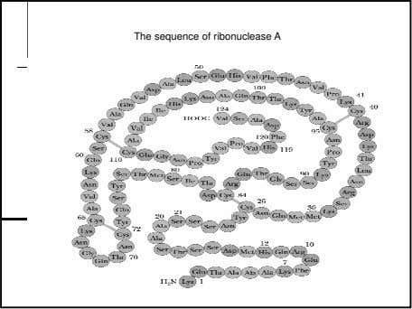 The sequence of ribonuclease A