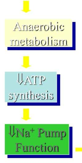 Anaerobic metabolism ATP synthesis Na + Pump Function