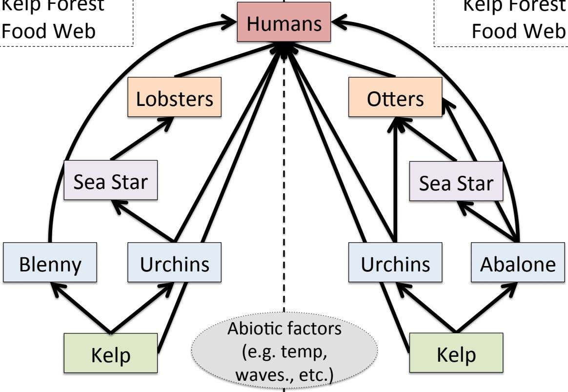 Humans Lobsters OHers Sea Star Sea Star Blenny Urchins Urchins Abalone Kelp AbioCc factors (e.g.