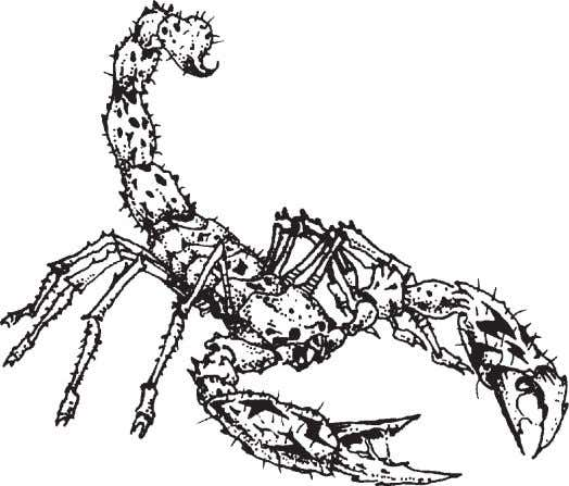 of a crazed animal, and they have the temperament to match. Scorpion Creatures of the arid