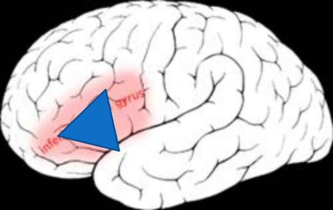 Speech  Most often – but not always – left hemisphere  Pars triangularis through pars