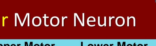 Upper or Lower Motor Neuron We Upper Motor Present Lower Motor Present F No Yes A