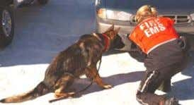 a K-9 team patrolling an area is deemed to be tremendous. A number of years ago,