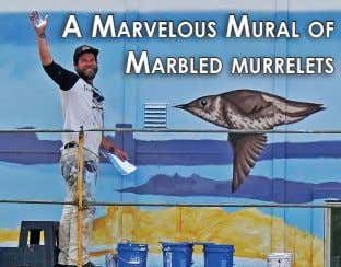 A MArvelous MurAl of MArbled Murrelets