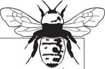are all jumbled. Put the letters in the right order. The Silent Bee The bee in