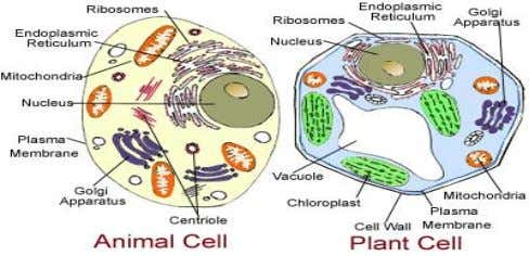 Plant cells have chloroplasts and a cell wall . ……. Cell Structure Function Cell (Plasma) Membrane