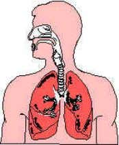 . Describe the process of gas exchange in the lungs. Copyright 2005 – Developed by Edquest