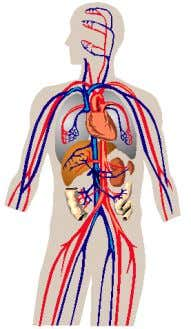 differences between arteries , veins and capillaries . Illustrate and then describe the functi ons of