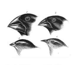 the function of gathering food. Variations In Bill Shape Bill Type Finch 1 Finch 2 Finch