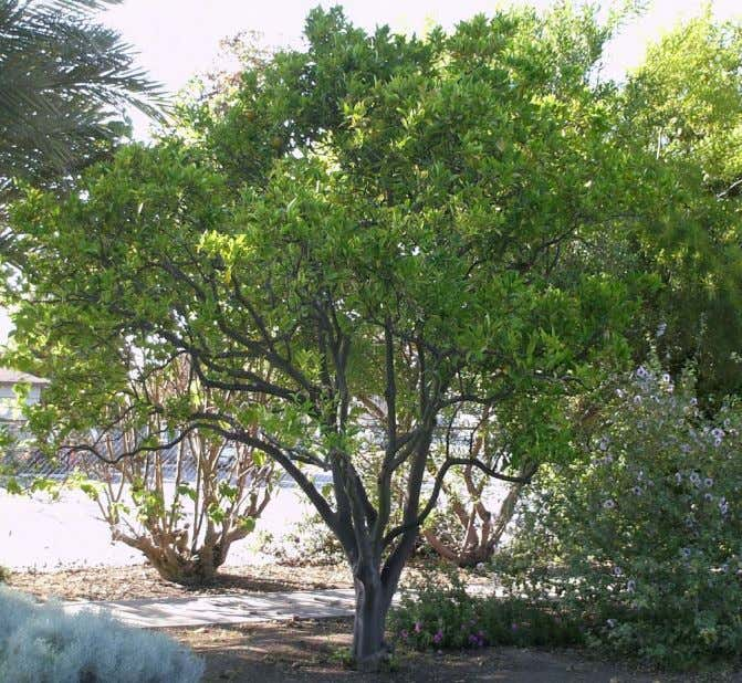 penetrate through the tree so that fruiting wood is produced and so that insect and di