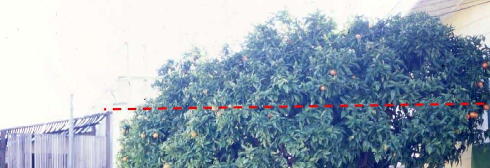 generally be tt er to red uce the tree size over a period of several years