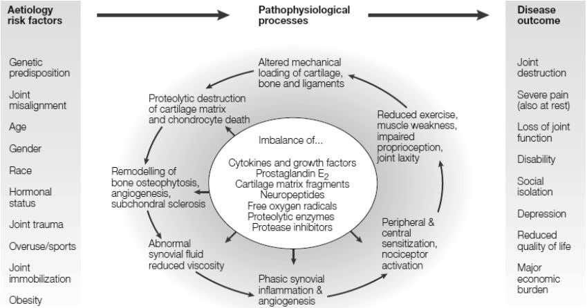 (From: Hunter and Felson. Osteoarthritis. BMJ. 2006). 1 5 Figure 1.4 The intricate balance between risk