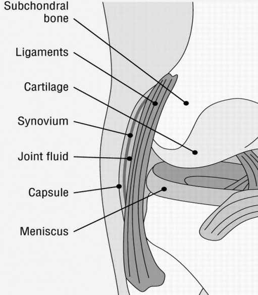 Introduction 1 Figure 1.3 Anatomy of a synovial joint (From: Hunter and Felson. Osteoarthritis. BMJ. 2006).
