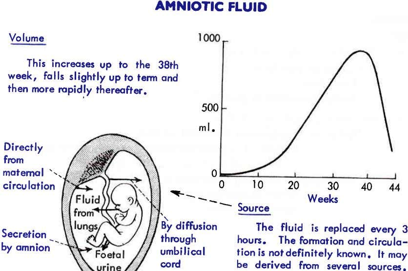 AMNIOTIC FTUID Volume This increoses up to the 38th week, folls slightly up to term