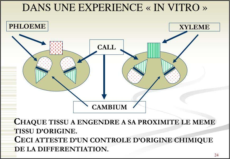 DANS UNE EXPERIENCE « IN VITRO » PHLOEME XYLEME CALL CAMBIUM CHAQUE TISSU A ENGENDRE