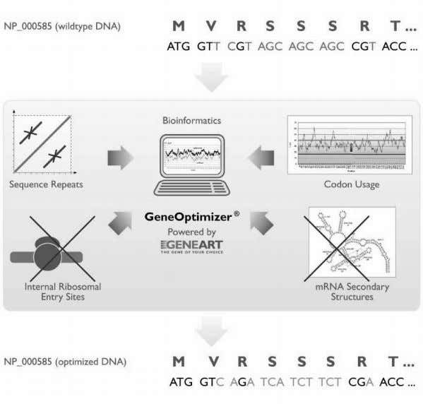Figure 2. Optimization and synthesis of human protein coding sequences . The gene optimization process