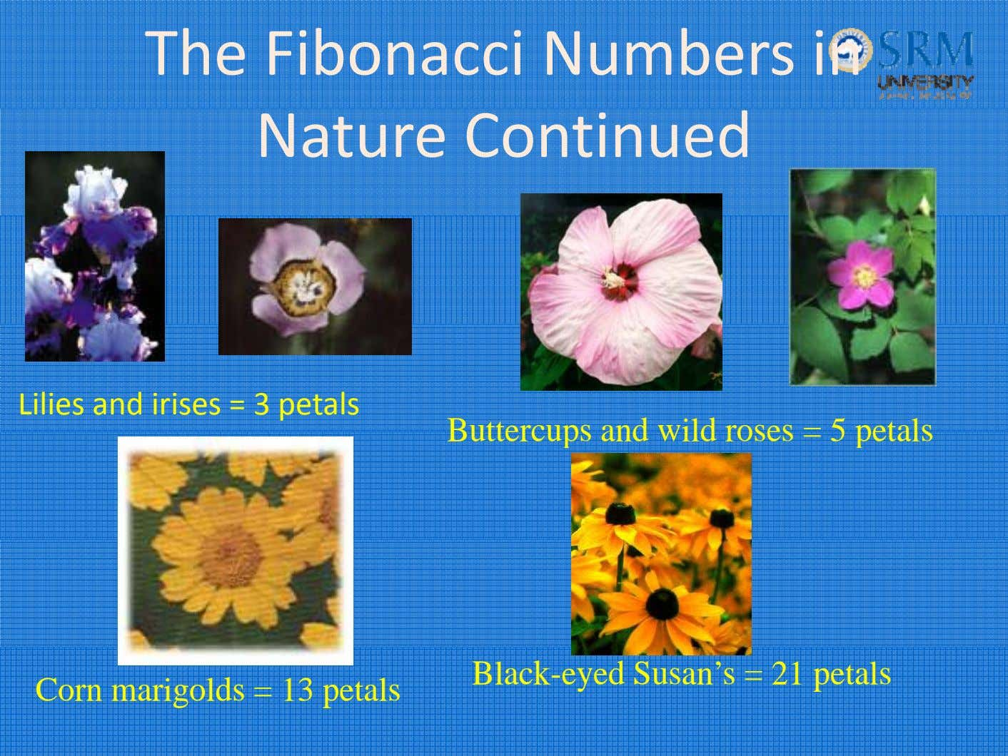The Fibonacci Numbers in Nature Continued Lilies and irises = 3 petals Buttercups and wild