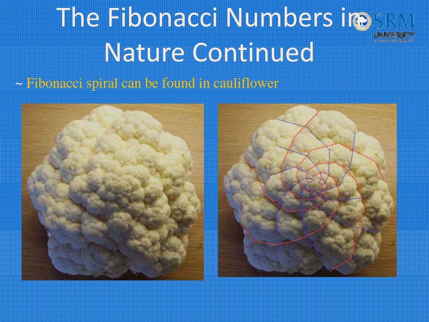 The Fibonacci Numbers in Nat ure C onti nue d ~ Fibonacci spiral can be