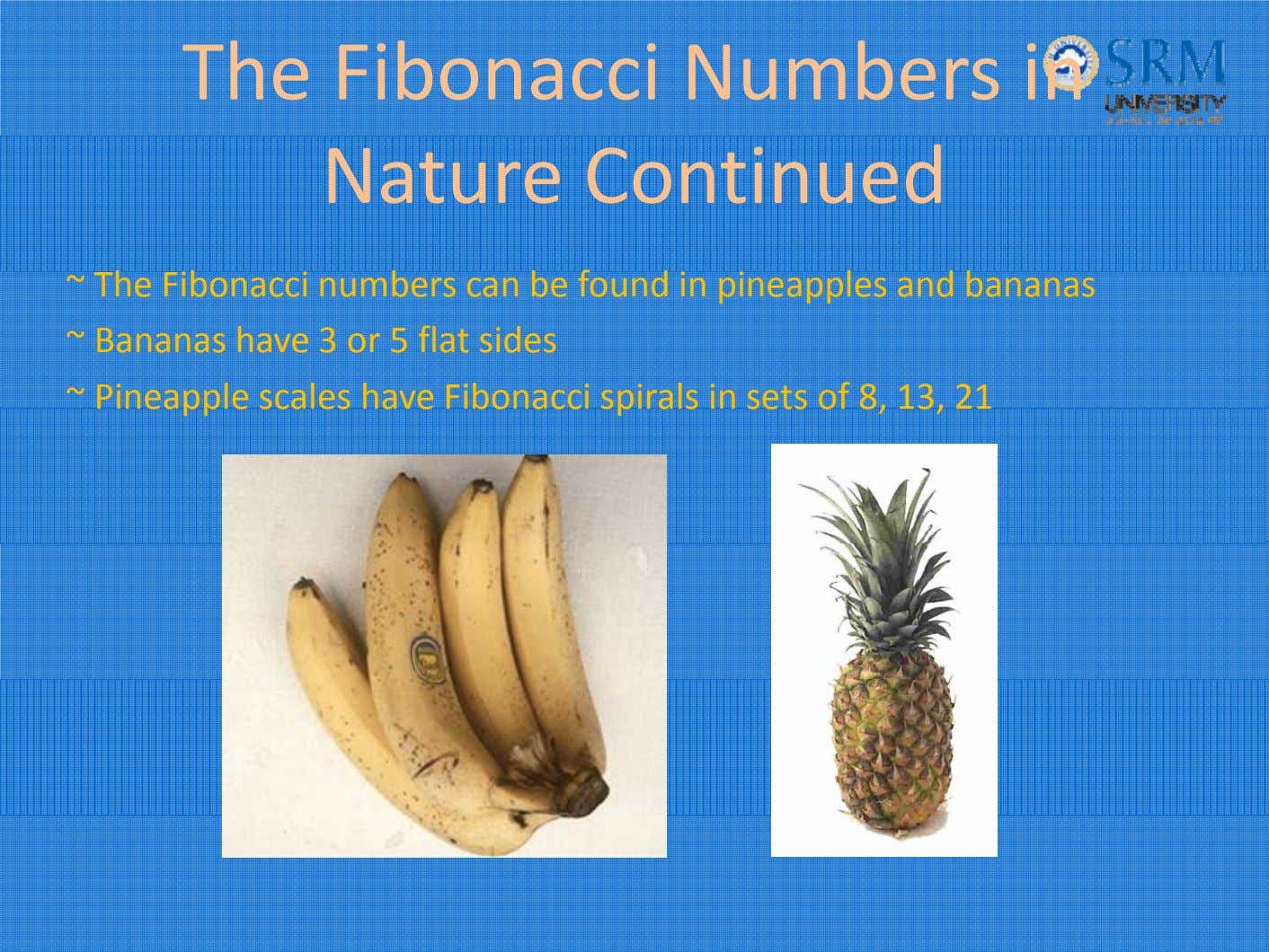 The Fibonacci Numbers in Nature Continued ~ T h e F ib onacci num b