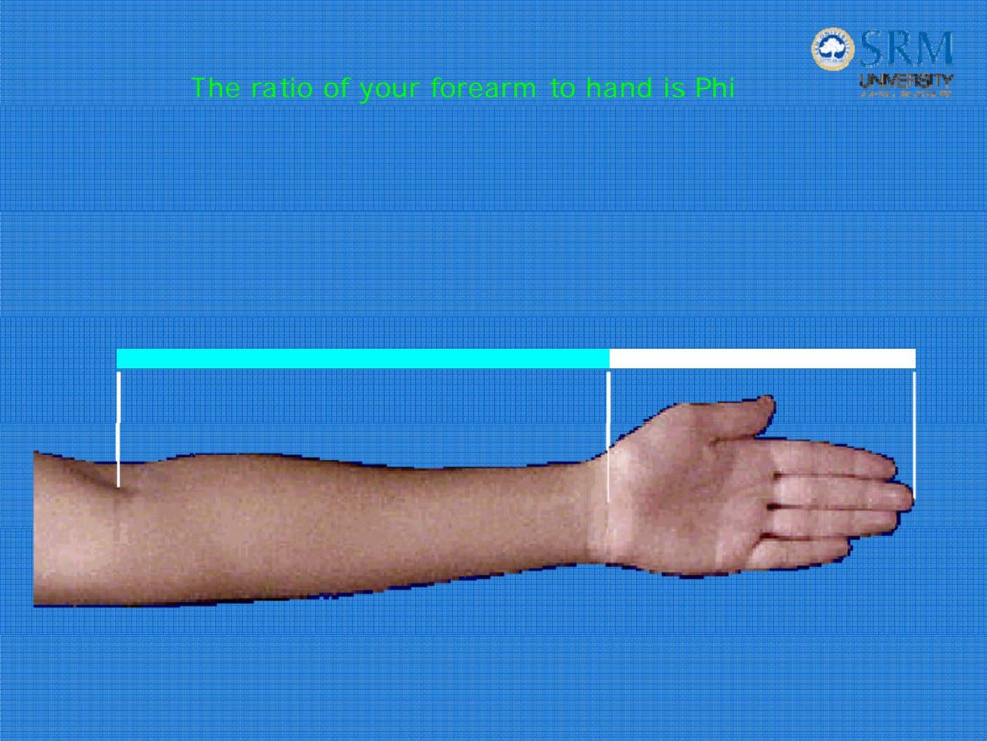 The ratio of your forearm to hand is Phi
