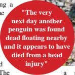 """The very next day another penguin was found dead floating nearby and it appears to"
