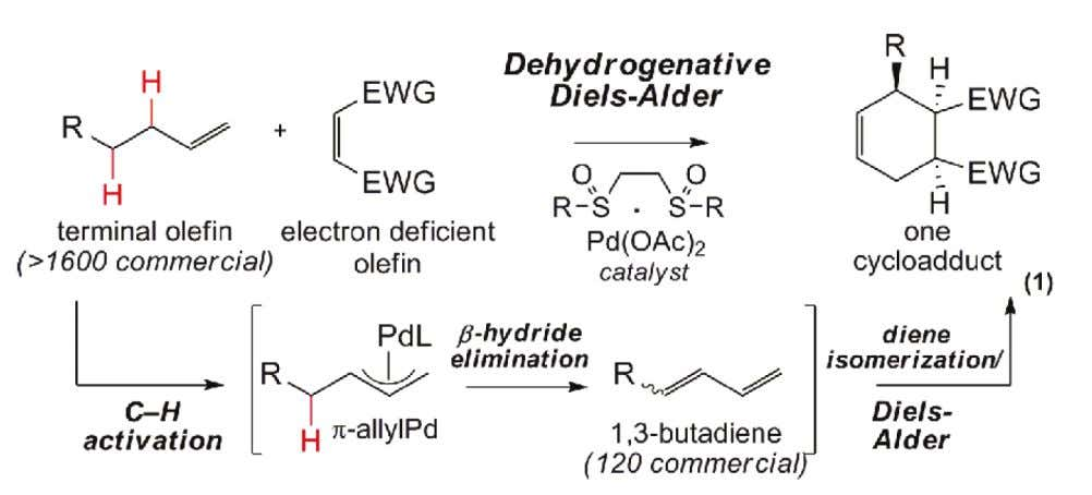 of β - Hydride Elimination: Dehydrogenative Diels-Alder • The First dehydrogenative Diels-Alder Stang, E. M.;