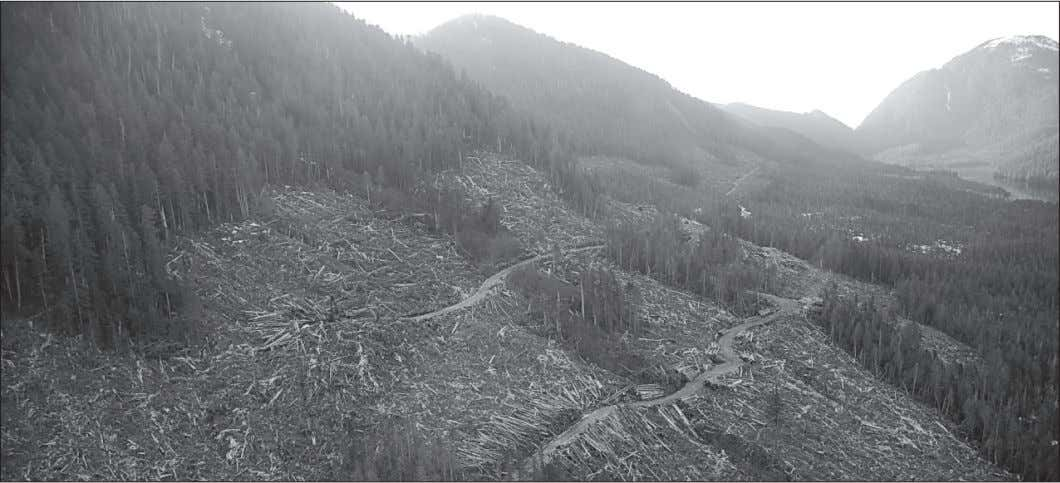 Negotiated Surrender Outcomes for the Nuxalk and the Rainforest Clearcutting in the Great Bear Rainforest. The