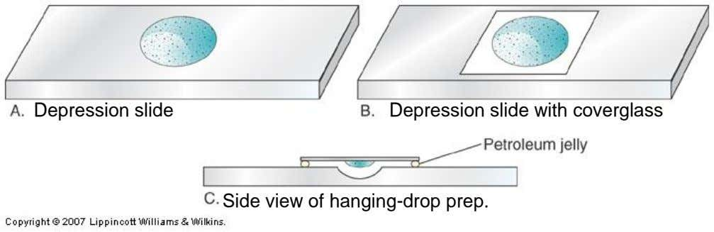 Depression slide Depression slide with coverglass Side view of hanging-drop prep.