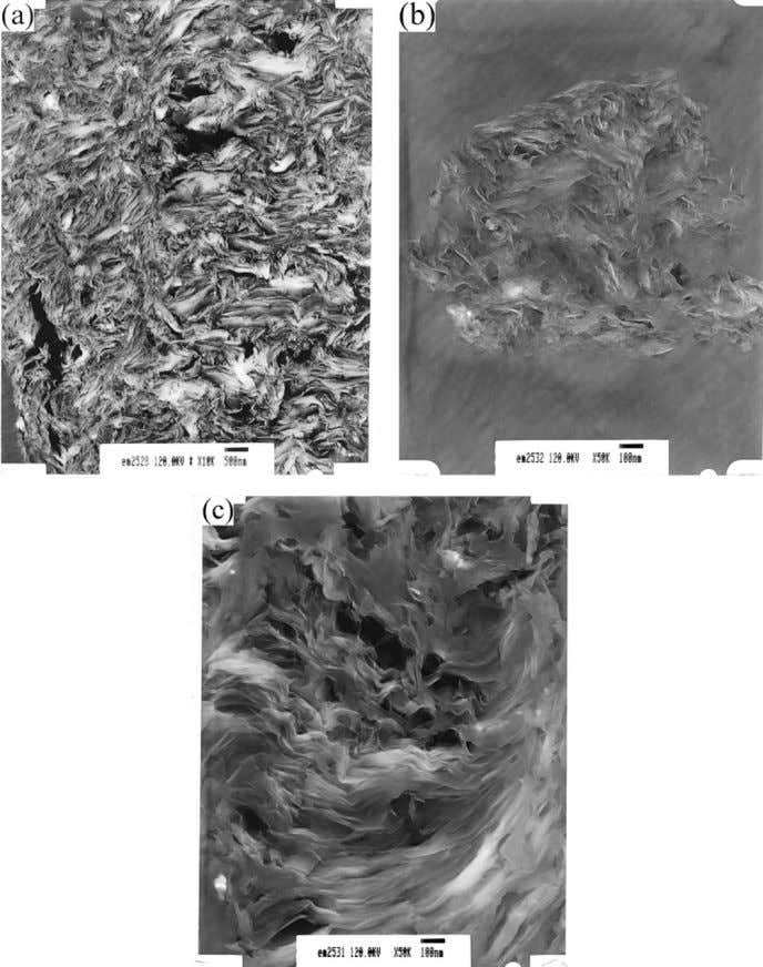 292 LIU ET AL. Figure 3 TEM images of PsCN5 (a) at 10 k magnification and