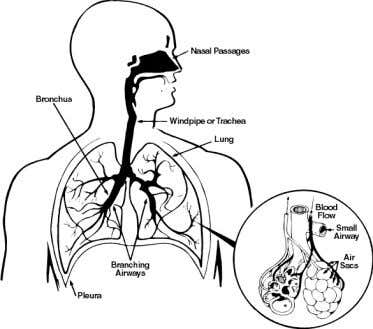hazards and diseases commonly associated with them. THE RESPIRATORY SYSTEM INHALA TION The body's