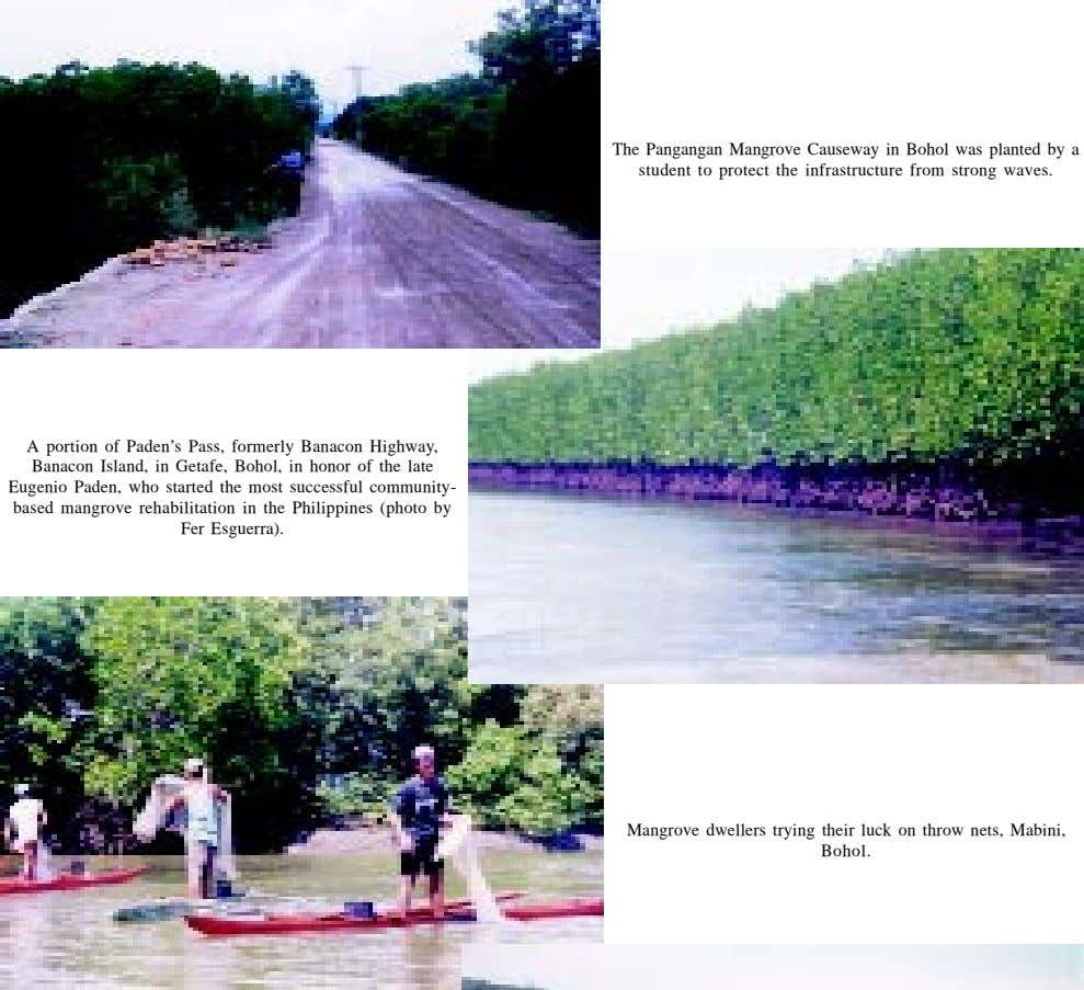 The Pangangan Mangrove Causeway in Bohol was planted by a student to protect the infrastructure