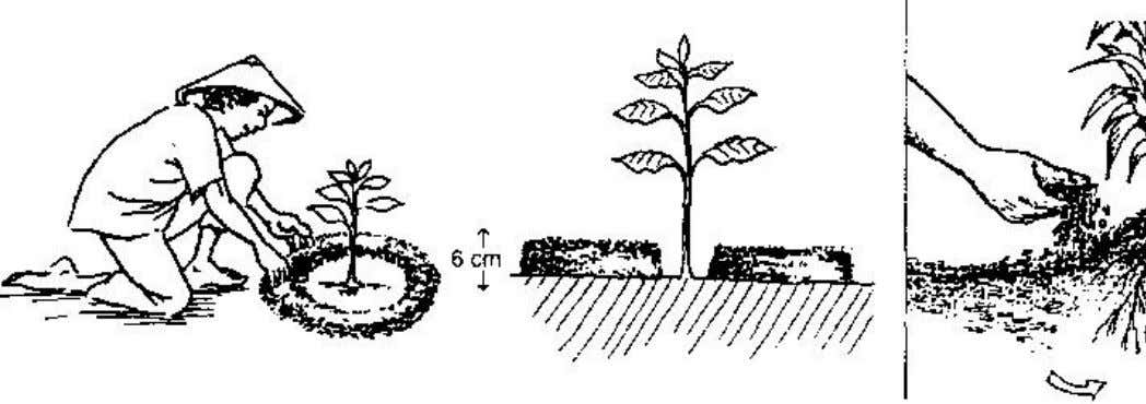 http://www.fao.org/docrep/V5290E/v5290e04.htm#P3950_144970 Home garden technology leaflet 6: Use of sloping land All of
