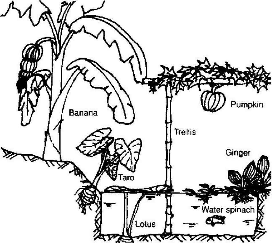 the sun or from predators. Figure 2 Fish pond and swamp land Home garden technology leaflet