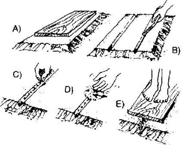 water the seed bed. Figure 1 A seed bed Figure 2 Sowing seed Figure 3 Transplanting