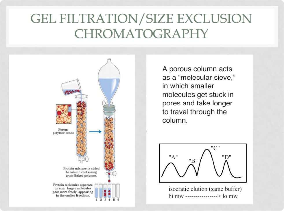 GEL FILTRATION/SIZE EXCLUSION CHROMATOGRAPHY