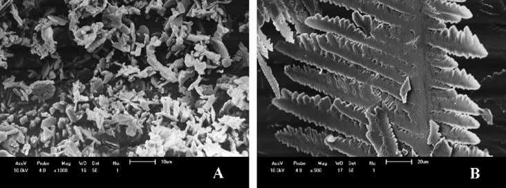 concentration at the highest values (runs 4 and 8) the Fig. 4. SEM micrographs of the
