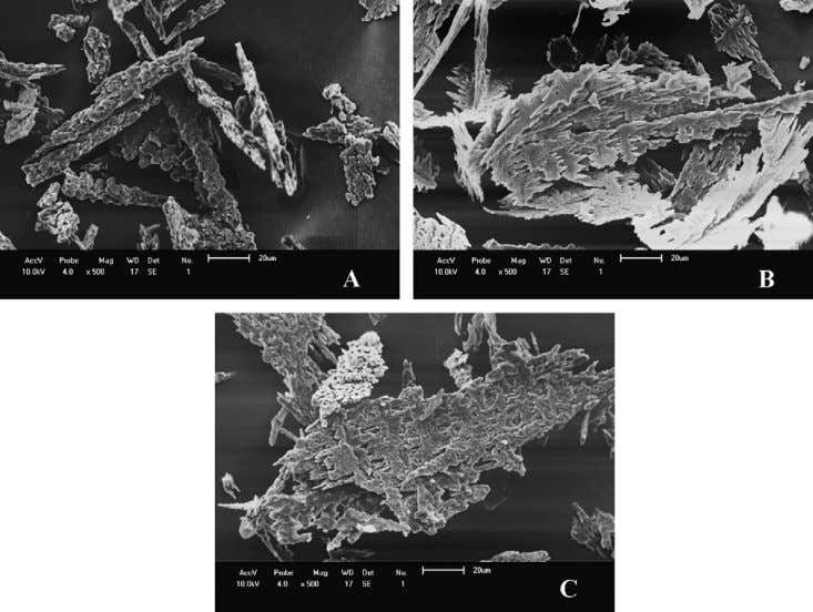 a common feature found in many works in the literature. Fig. 6. SEM micrographs of the