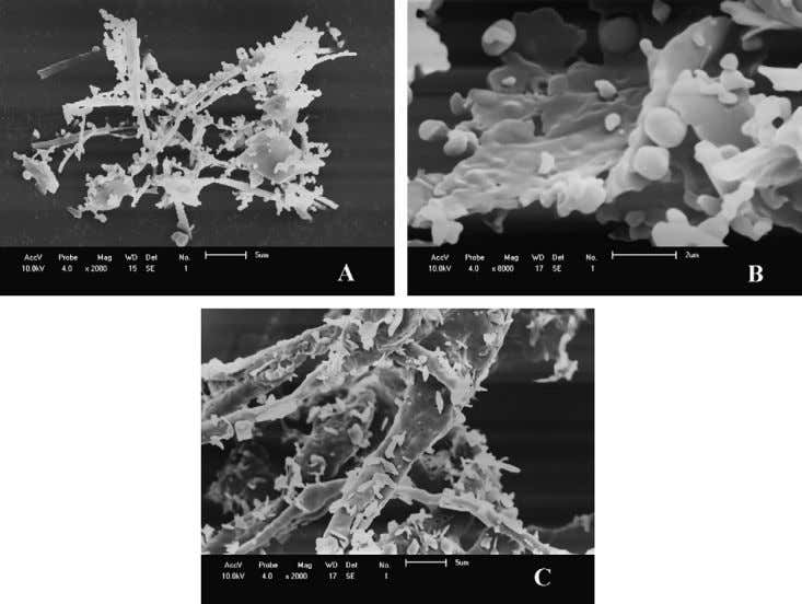et al. / J. of Supercritical Fluids 47 (2008) 259–269 Fig. 9. SEM micrographs of the