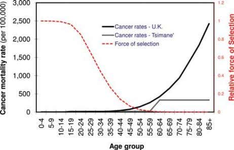 1 5 4 D.T.A. EISENBERG Fig. 2. Cancer mortality rates and the force of natural selection