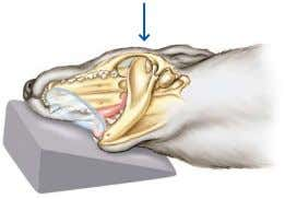 beam 20° from perpendicular (remember to realign grid). Frontal sinus view Position hard palate perpendicular to