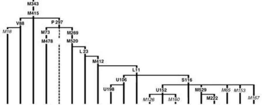 page). A tree diagram constructed on the basis of Figure 6. Figure 8. A tree of
