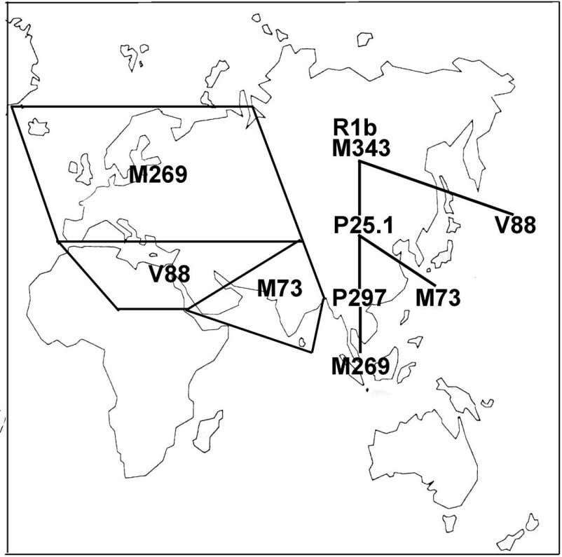 16 Figure 9 . The idealized areas of subclides V88, M73, and M269 and their phylogenetic