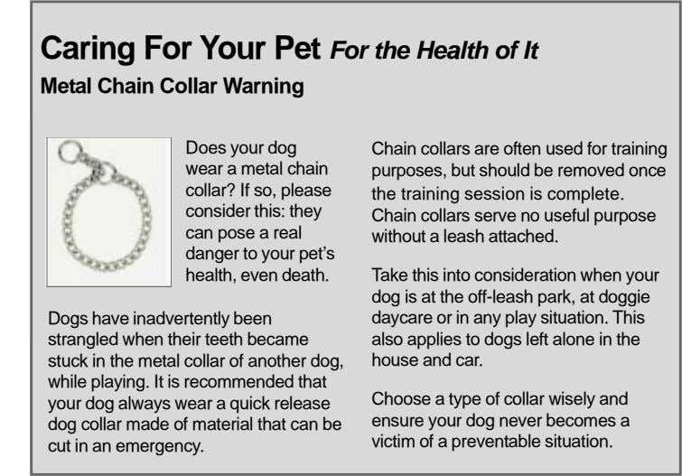 Caring For Your Pet For the Health of It Metal Chain Collar Warning Does your